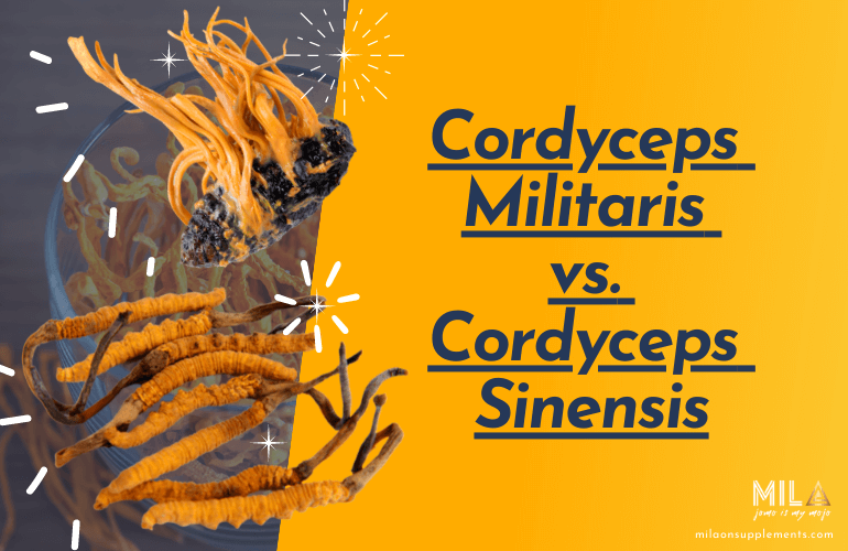 Cordyceps Militaris vs Cordyceps Sinensis