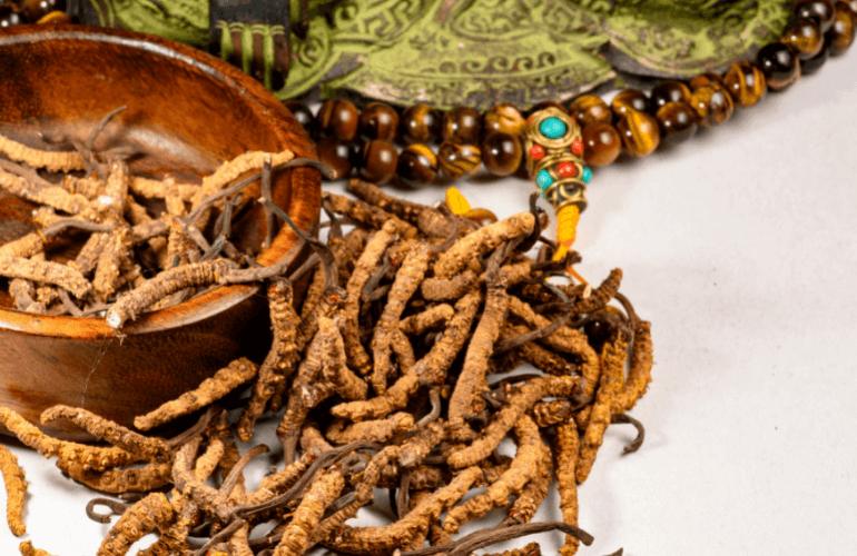 Cordyceps Mushroom Recipes for Tea