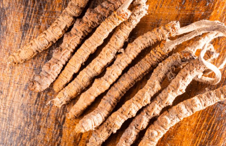 Cordyceps Sinensis Dried