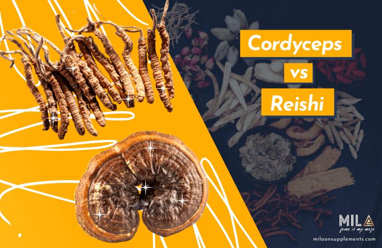 Cordyceps vs Reishi