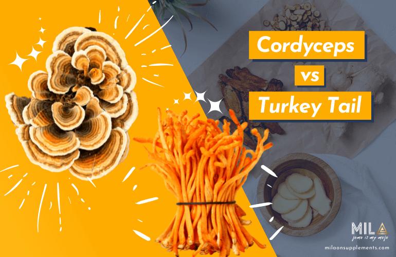 Cordyceps vs Turkey Tail
