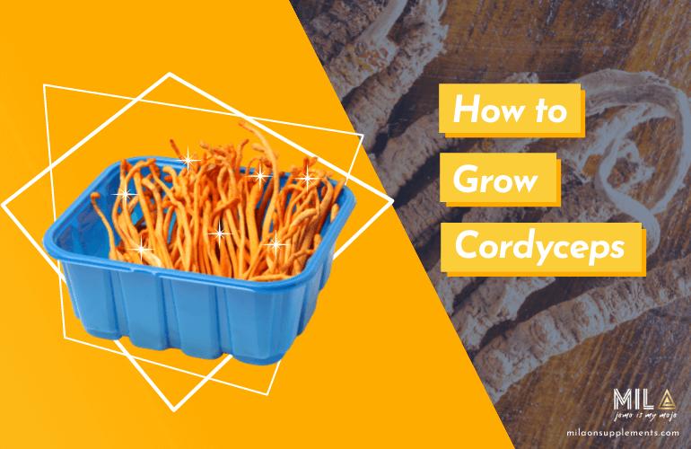 How to Grow Cordyceps